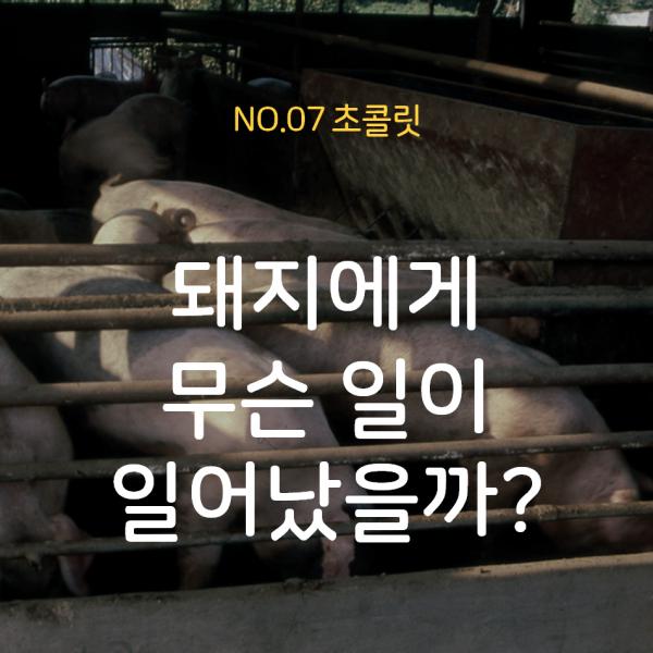 [07호 초콜릿] 돼지에게 무슨 일이 일어났을까